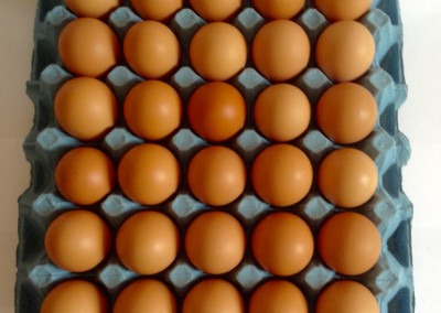 Free Range Catering loose eggs.